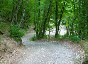 Отличное место, для любителей прогулок по пересеченной местности.