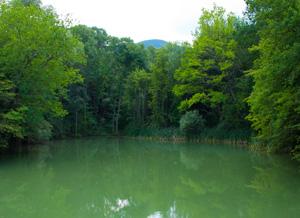 Тихая заводь озера - для любителей тишины во время рыбалки.