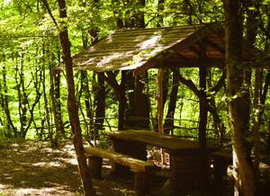 Кроны деревьев хорошо защитят вас от яркого полуденного солнца.